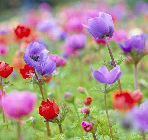 http://hostingkartinok.com/uploads/images/2012/04/f0e8e885bdad364811e05b359cccbeeb.jpg