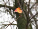 Осенний фотоконкурс 3d7f357fb37eb20234168b1125550325