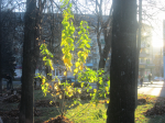 Осенний фотоконкурс F26f5dc68ae5b5bb013f334c7be900e1
